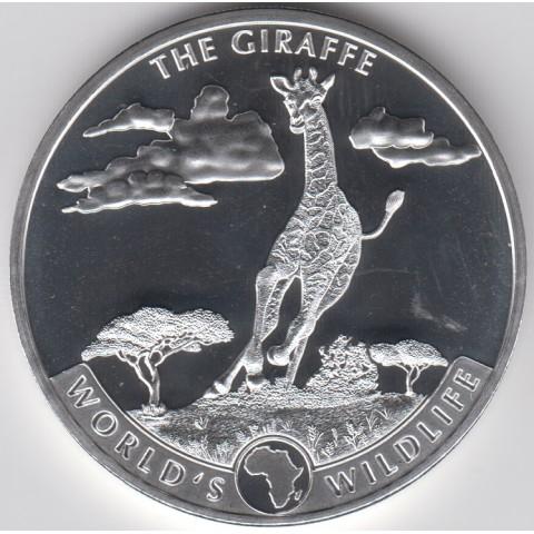 2019. Onza Congo. Jirafa
