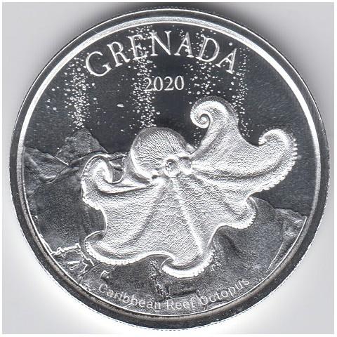 2020. Onza Caribe. Octopus