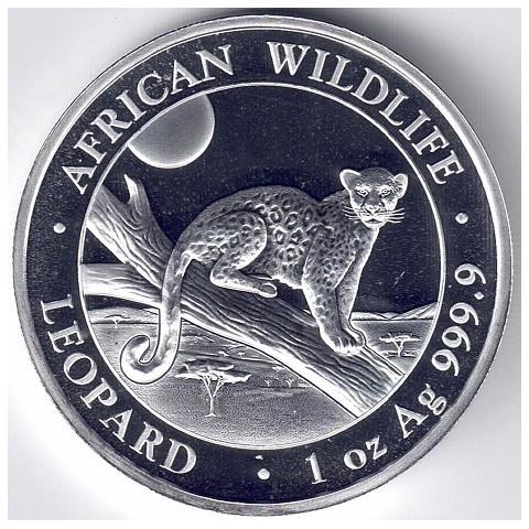2021. Onza Somalia. Leopardo